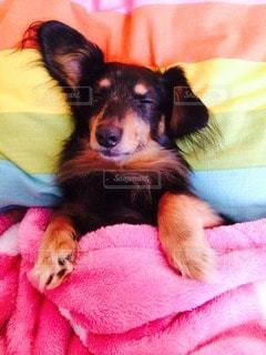 犬の写真・画像素材[12470]