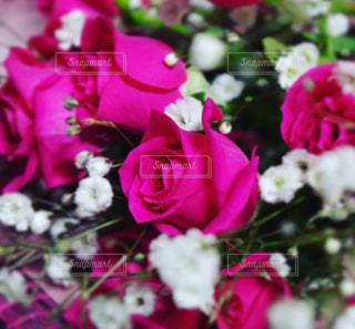 花の写真・画像素材[405353]