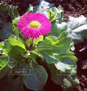 花の写真・画像素材[405607]