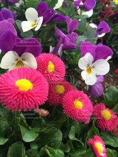 花の写真・画像素材[418204]