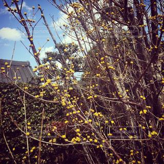 花の写真・画像素材[405940]