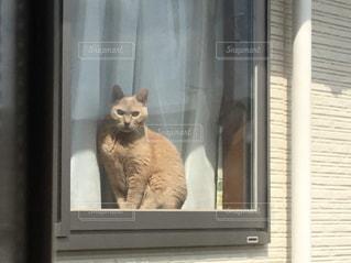 窓の前に座っている猫の写真・画像素材[2875538]