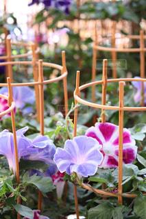 花の写真・画像素材[610549]