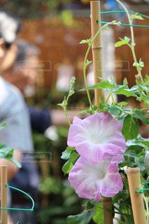 花の写真・画像素材[610550]