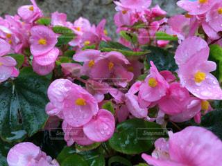 花の写真・画像素材[446006]