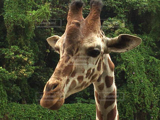 動物の写真・画像素材[446011]