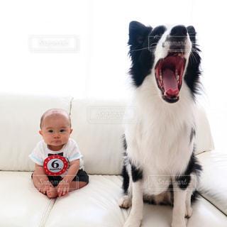犬の写真・画像素材[406697]