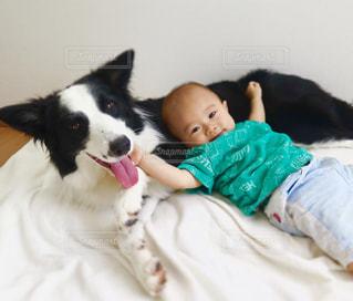 犬の写真・画像素材[406699]