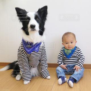 犬の写真・画像素材[406705]