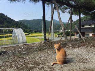 猫の写真・画像素材[703973]