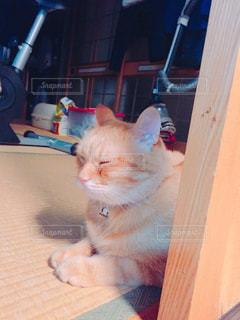 待ちぼうけ猫の写真・画像素材[738634]