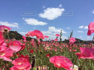 植物にピンクの花の写真・画像素材[750861]