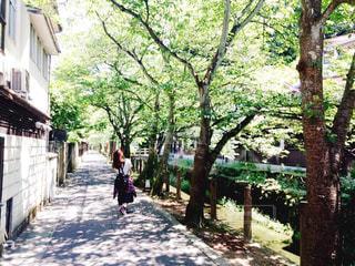 並木道を歩く人の写真・画像素材[751147]