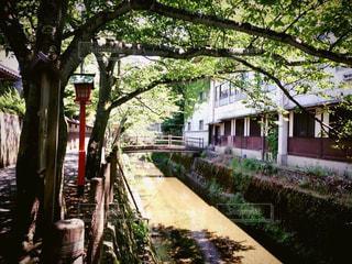 並木通りの写真・画像素材[751148]