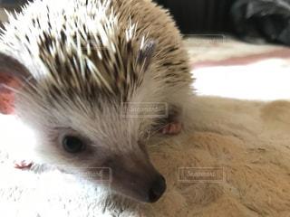 動物の写真・画像素材[551324]
