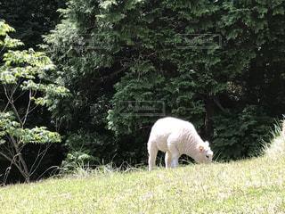 動物の写真・画像素材[552797]