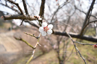 花の写真・画像素材[406919]