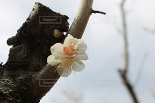 自然の写真・画像素材[406888]