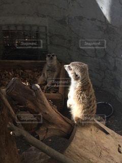 動物の写真・画像素材[475415]