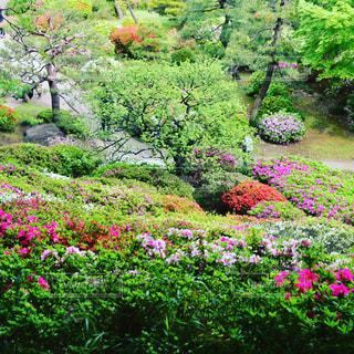 花の写真・画像素材[409092]