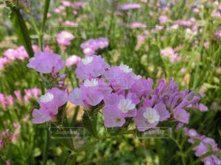 花の写真・画像素材[406991]