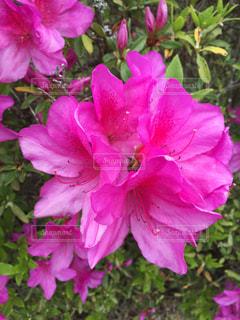 花の写真・画像素材[407206]