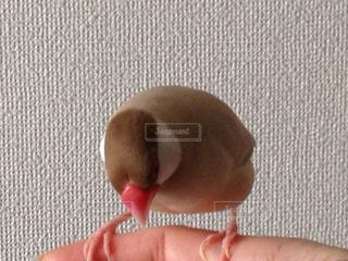 鳥の写真・画像素材[407375]
