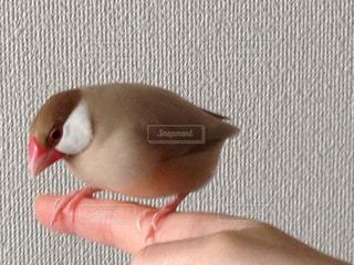 No.407376 鳥