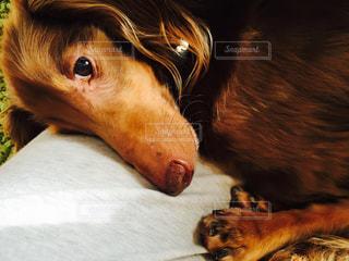犬の写真・画像素材[408390]