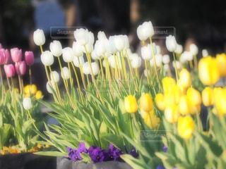 近くの花のアップ - No.970615