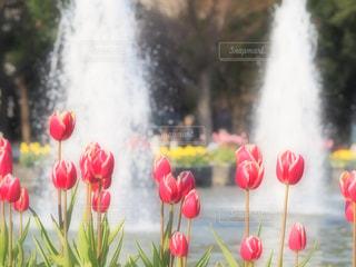 近くの花のアップ - No.970616