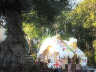 お菓子の家の写真・画像素材[970619]