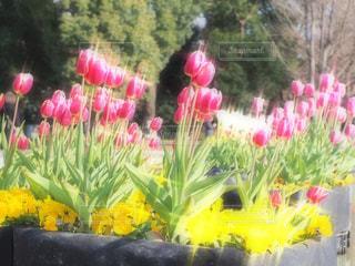 近くの花のアップ - No.970620