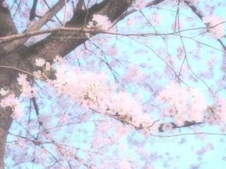 近くの木のアップの写真・画像素材[1104483]