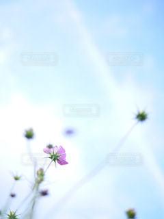 空の写真・画像素材[407674]