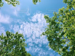 夏空の写真・画像素材[1275789]