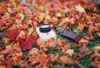 紅葉とカメラの写真・画像素材[1389697]