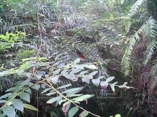 天然記念物のトンボの写真・画像素材[409909]