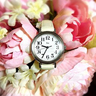 花の写真・画像素材[439297]