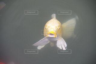 魚 - No.408344