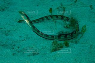 水中の生き物の写真・画像素材[1649768]