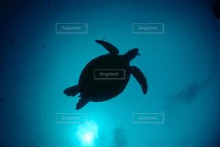泳ぐカメの写真・画像素材[1649770]