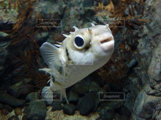 魚の写真・画像素材[441033]