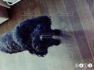 犬 - No.411665