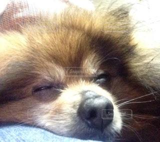 犬の写真・画像素材[409896]