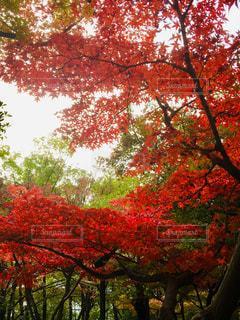 街中の紅葉の写真・画像素材[2765067]