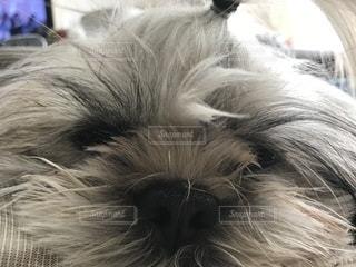 近くに犬のアップの写真・画像素材[1005243]