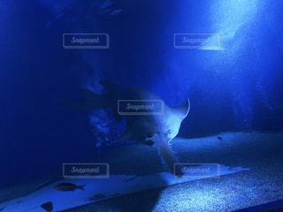 ノコギリサメの写真・画像素材[2406522]