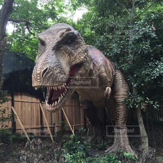 ティラノサウルスの写真・画像素材[410546]