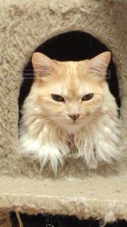 猫の写真・画像素材[412273]